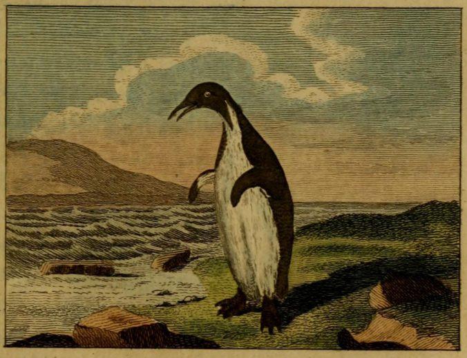 buffon-pingouin-e1521573621279