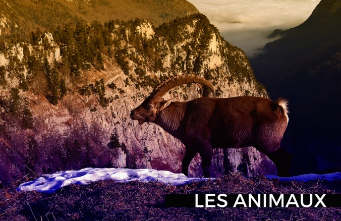 blog animaux